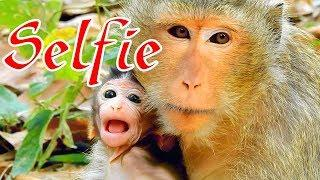 Ah! Female Monkey Gladdis Wants To Take Julina From Jade, Funny Baby Monkey George