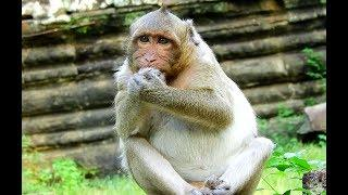 Sp's Similar An Expecting Female Monkey, Cause His Belly Is Too Big