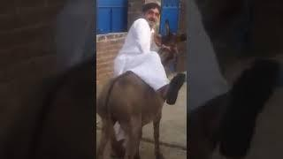 Village Boy With Donky Female Very Funny Video