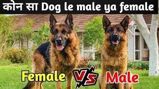 Dogs में क्या खरीदें Male और Female / male Vs female / Dog channel