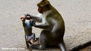 OMG Break Heart To See Baby Is Kidnapped &Attacked By Female Monkey Posseum. p2