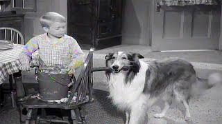 Lassie❄️???? A Christmas Story❄️????Christmas Special ❄️????Christmas Movie For Kids ❄