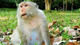 Poor Female Monkey At Temple, Female Queen Monkey Need Some Food
