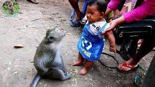 Female monkey name Sok  request talk baby girl but baby terrified until crying