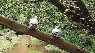 Bird Fight in KL Bird Park Kuala Lumpur