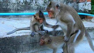 why big female monkey do like this on in | Unhappy & sad