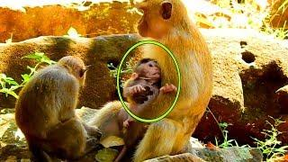 This Young Female Monkey Kidnapping Poor Janet, Janet Try To Get Out Of Hand,