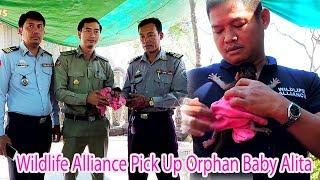 Hot News Finally We Called Wildlife Alliance Pick Up Orphan Baby Alita To Live At WLA / PTM 1811