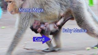 Welcome Mama Maya Gave A Birth Newborn Baby Female Named Masha / Baby Masha So Beautiful