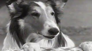 Lassie | Stablemates | Lassie English Full Episodes | Kids Cartoon | Old Cartoon ????