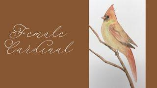 Art is for Everyone: Female Cardinal