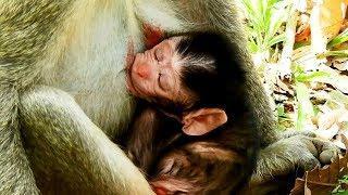 Jane Gives Birth ! Congratulation Newborn Baby_So Cute Female Newborn baby On 10/11/2018