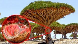 STRANGEST Plants In The World!
