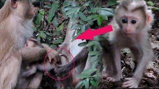 Oh My God Why Hybrid Female Try To Drag Newborn Baby Pigtail Molly From Mama Molla ? PTM 970