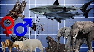 Animal Size Comparison - Females v Males