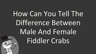 How can you tell the difference between male and female fiddler crabs