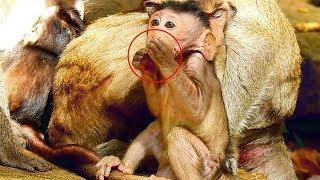 Female Monkey Violet Eat Mango For Saving Her Milk, Janet So Sad Cause Hungry&Jane Sleeping
