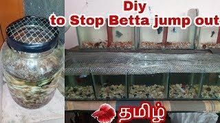 DIY:: female fighter fish is dead :: Why do betta fish jump out of tank? in Tamil