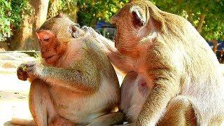 Mom Said To Sonny SP Monkey Must Be Strong, Why Female Monkey Sometimes Make Jessie Monkey Hurts