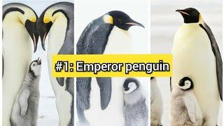 #1: EMPEROR PENGUIN???? |The 9 Best Dads of the Animal Kingdom