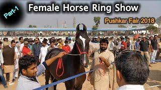 Part-1 Female Horse???? Ring Show Competition - Pushkar fair 2018|पुष्कर मेला