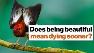 Does being beautiful mean dying sooner? In nature, it can. | Richard Prum