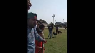 Rottweiler Female Open Class - Dog Show