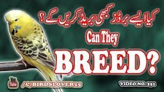 kia charbi wali female breed kar sakti hay? Video No 251