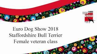Euro Dog Show 2018 - Staffordshire Bull Terrier female veteran class