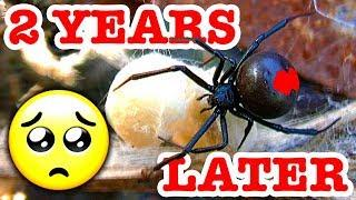 Redback Spider Car Wreck 2 Years John Cena's Relatives EDUCATIONAL VIDEO