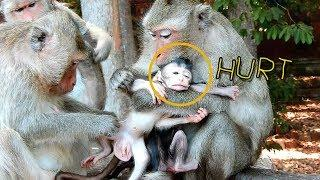 Female Monkey Jade Grab Eleno From Elsa, Why Baby Monkey Eleno Bits His Hand