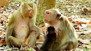 Wow! Female Monkey Violet Warning Again To Her Baby, Please Do Not Make Me Hurts For Next Time