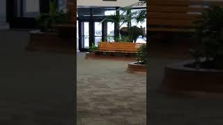 Moose Strolls Through Hospital || ViralHog