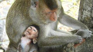 Pity poor Heidi baby monkey very sleepy & request female monkey sleep place