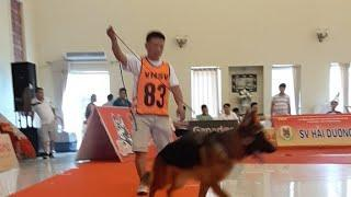 GSD Best Female In Show 5th 2019 Thái Nguyên