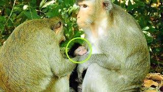 Hurt! Why This Female Monkey Make Viola Hurt, Viola Get Disturb From Female Monkey
