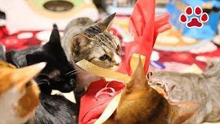 クリスマスケーキと猫達【瀬戸の三毛猫日記】Christmas cake and cats