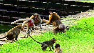 Ashley fighting seriously in same group , Male Monkey argue female , Why monkey do like this?