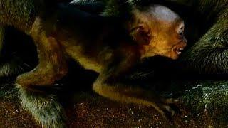 Nasty Female Monkey Give A Slap To A Little Baby Lorri 696