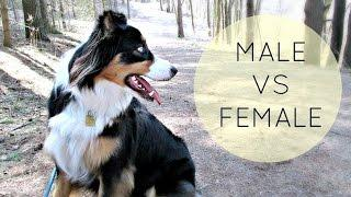 Puppy Series: Choosing a Male or Female Puppy