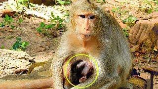 Update 3 1 2018 Congratulations Female Monkey Just Has A New Baby, Successful Newborn Baby Monkey