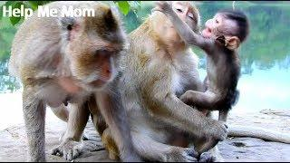 Million Sad, Baby Gino Cry So Lougly Try Move Out From Catcher Female Monkey, Gino Hungry So Much
