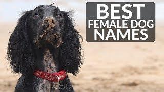 THE BEST FEMALE DOG NAMES! Most Popular Female Dog Names 2018!