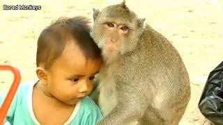 Very lovely monkey Sok take care baby human|Sok fall in love cute baby&Sok happy play wit kid