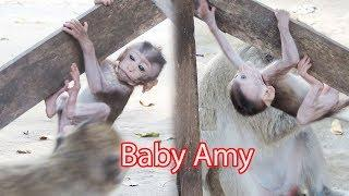 Baby Amy Happy Working Hard For Learning To Climb With Strong Big Legs and Very Long Arms / PTM 1362