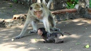 Oh no, Why female monkey hit tiny baby Heidi so bad on the ground