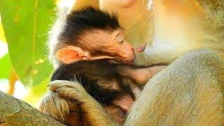 Pity Baby Monkey Julina Can Not Sleep Well, Female Monkey Hits Jade Monkey