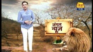Female Rangers Of Gir National Park Are The Real Lionesses | Jungle News