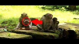 OMG!! Newborn baby Petter mistreat by female monkey crying nearly died?/ Petter need some help