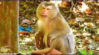 What Happen To Old Female Monkey, Female Monkey Drink A Water After She Nearly Got A Vomit